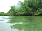Water level view of the mangrove at Lac Bay